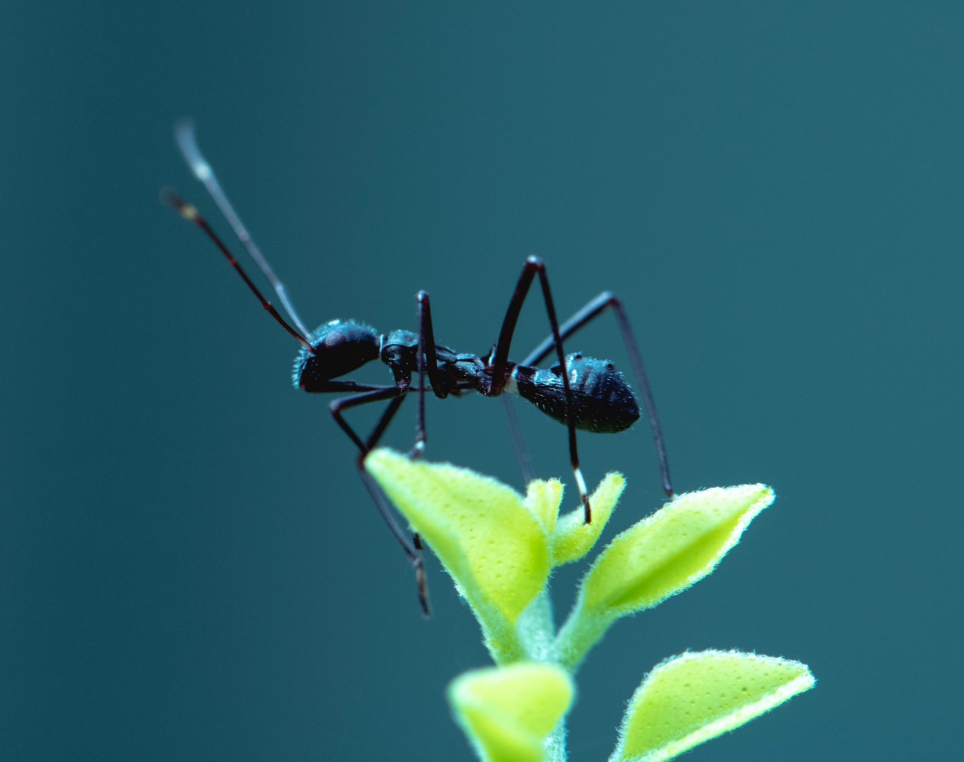 An ant perched on a leaf