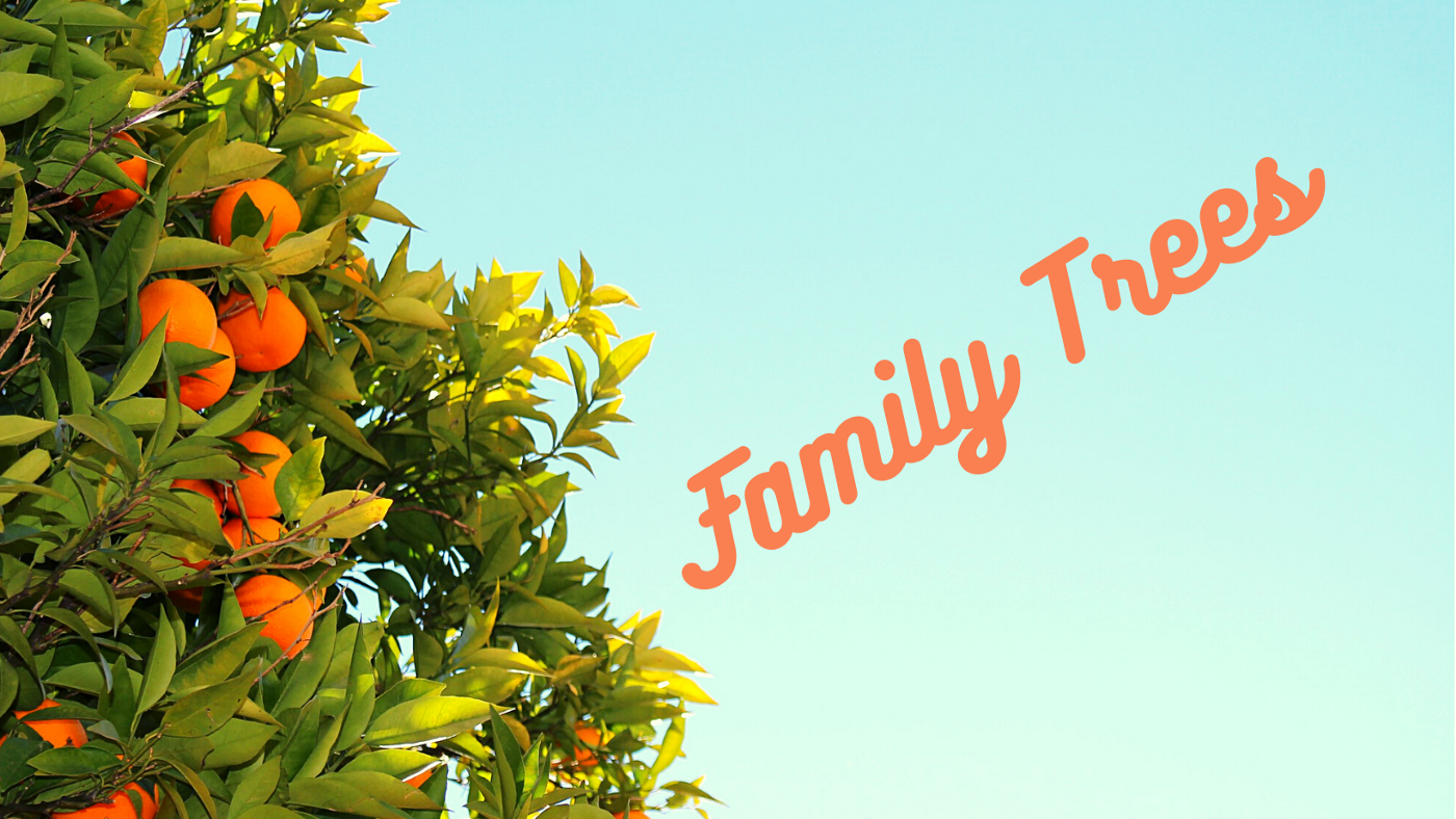 "Orange tree, sunshine sky background with orange text ""Family Trees"""