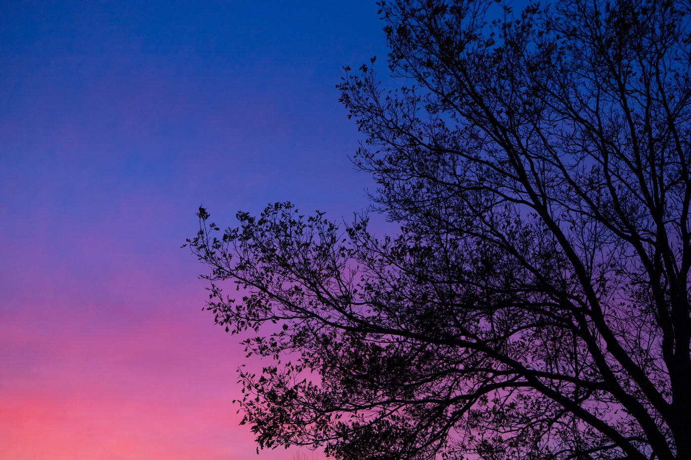 outline of a black tree against blue/purple/pink sunset sky