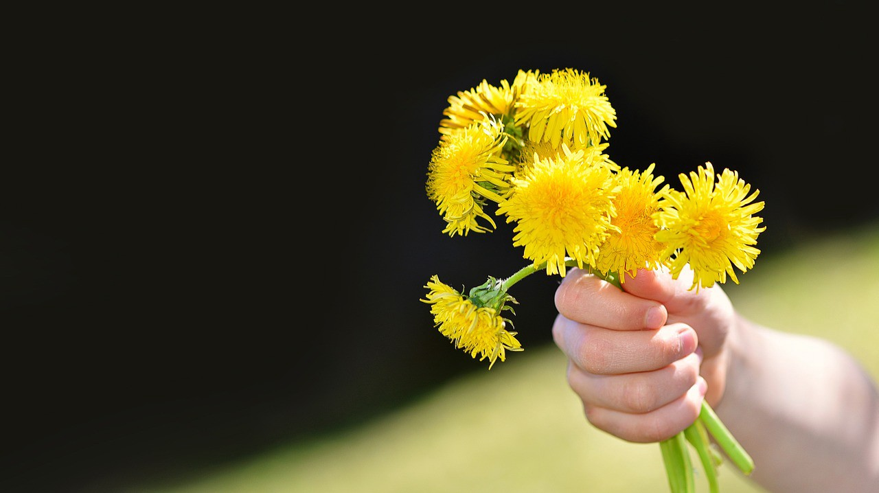 Child holding a bouquet of yellow dandelions