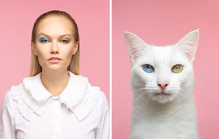 A white cat with two different colored eyes (blue and yellow-green), photographed next to a woman w matching makeup