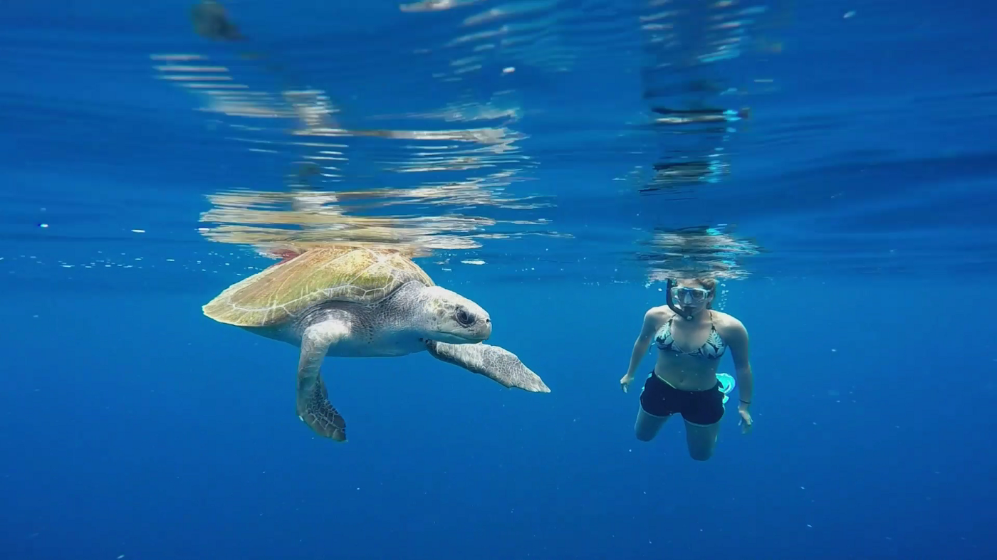 The author's wife, enjoying an encounter with a giant sea turtle.