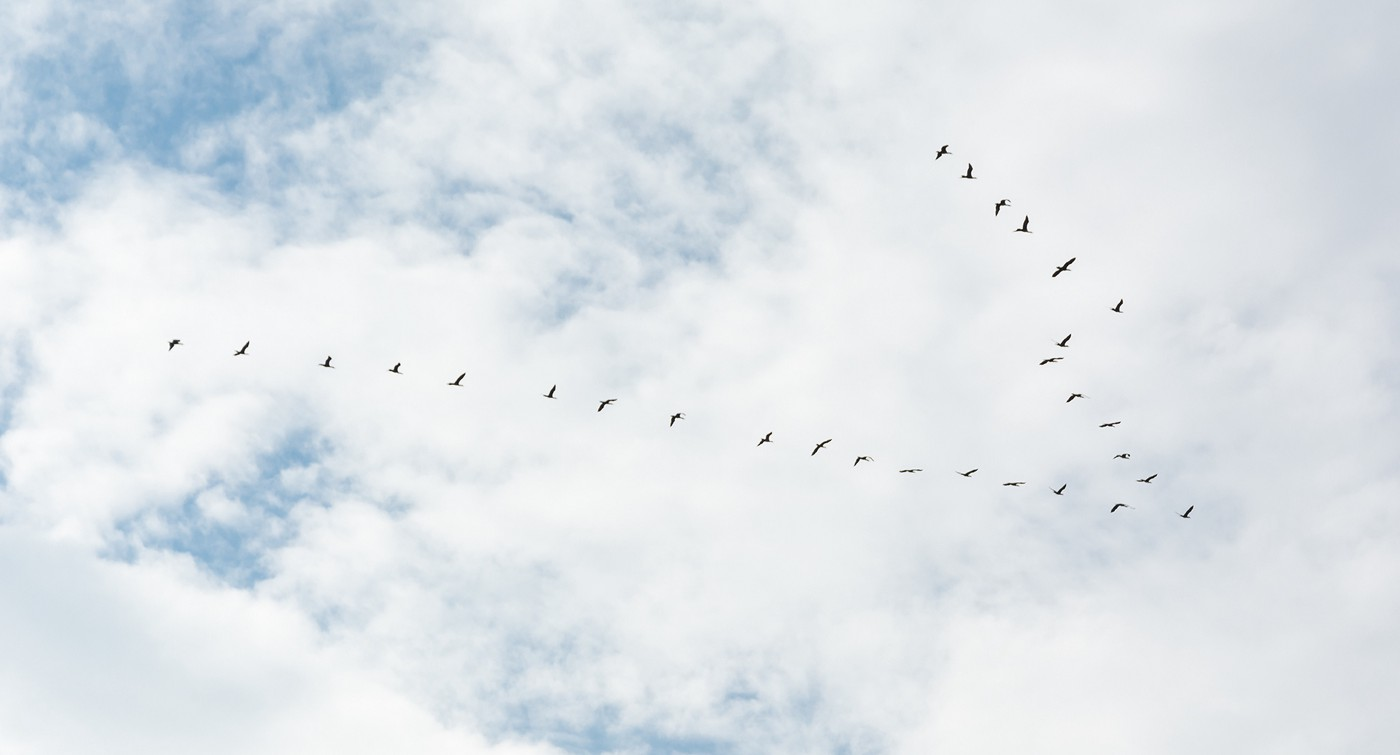 Migrating birds in formation, crossing a partly clouded sky