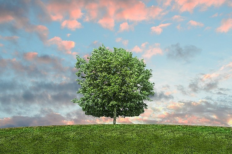 A tree sits atop a green hill and beneath a blue sky with pink and grey clouds