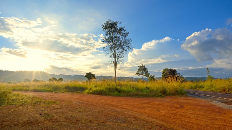 A photo of a dirt road with trees, grass and sun setting in the background.