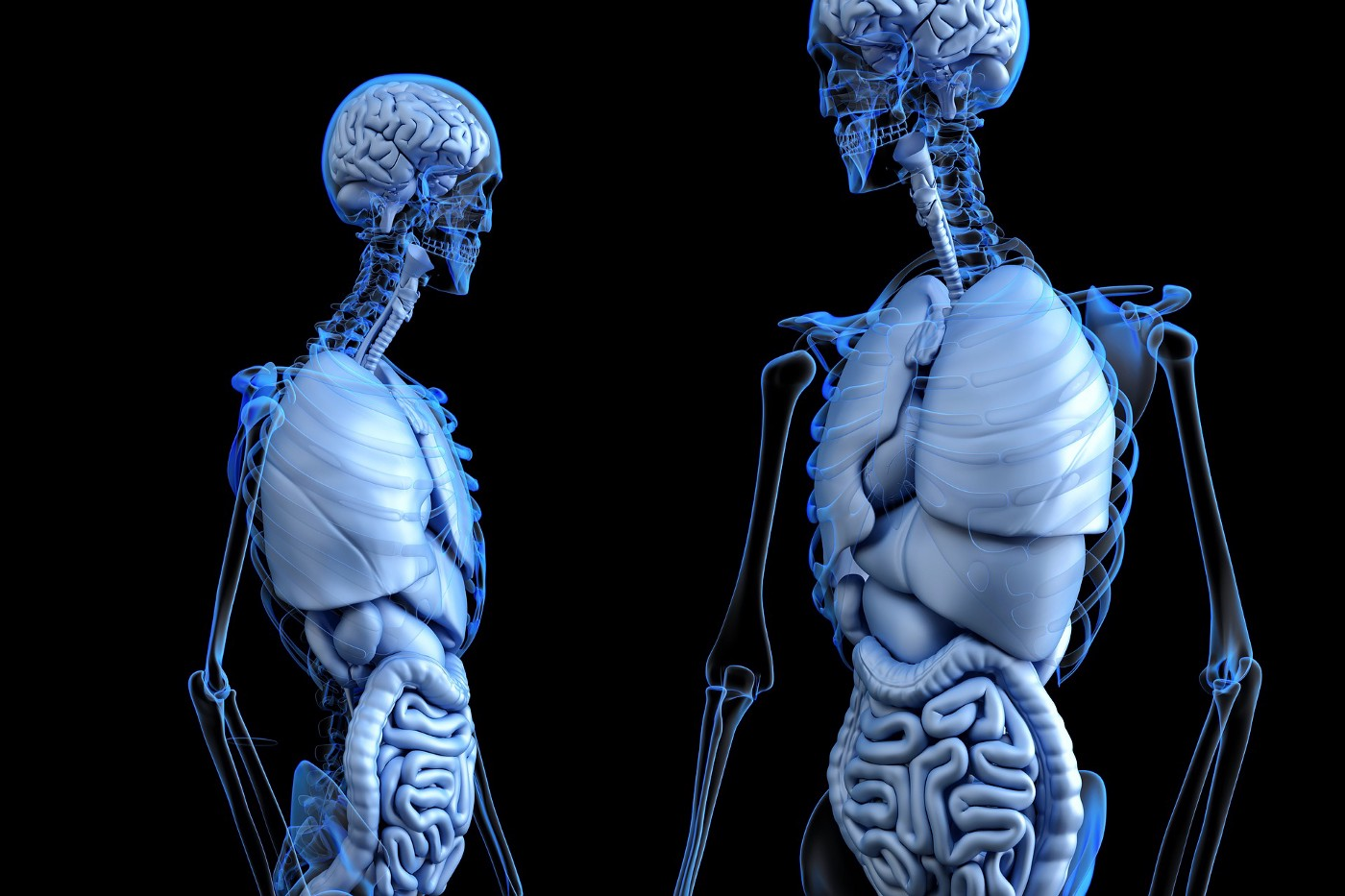 Image by www_slon_pics from Pixabay. Image description: two transparent human bodies showing the organs and skeletal structure from head to the waist.