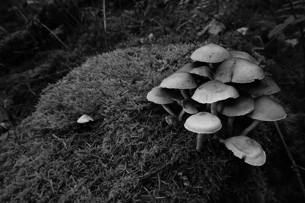 Picture of mushrooms on grass