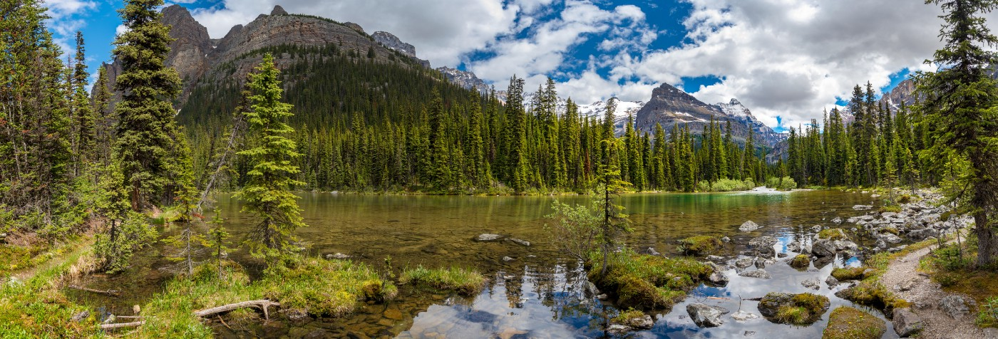 Small trees growing in shallow rocky water with trees and mountains in the background.