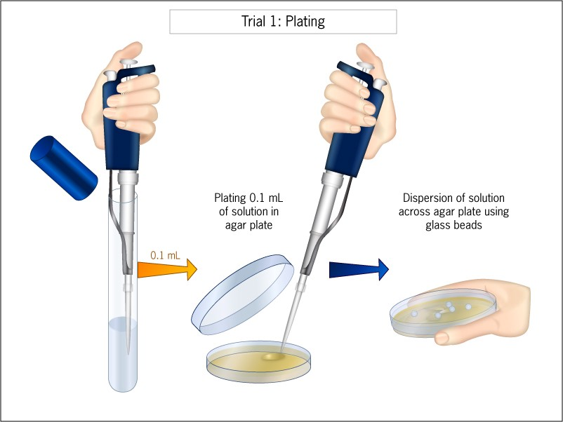 Diagram showing a floating hand micropipetting solution from a test tube onto an agar plate, then spreading solutoin around.