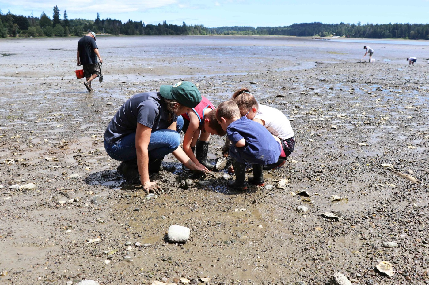A WDFW employee and three children dig for steamer clams at Oakland Bay Oyster Reserves.