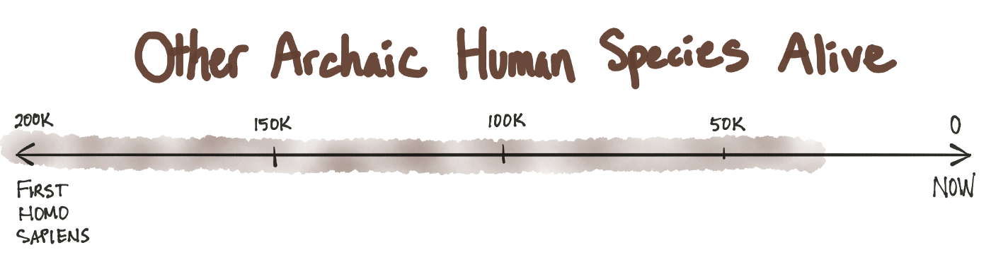 The Human Timeline - Number By Colors
