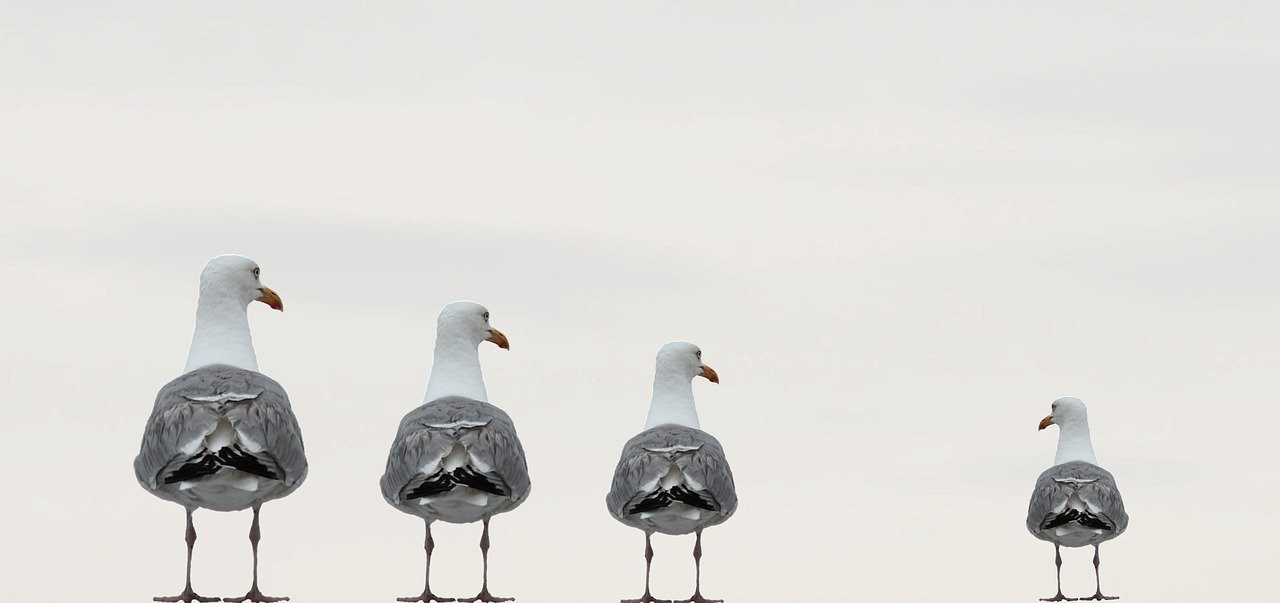 4 seagulls in a line