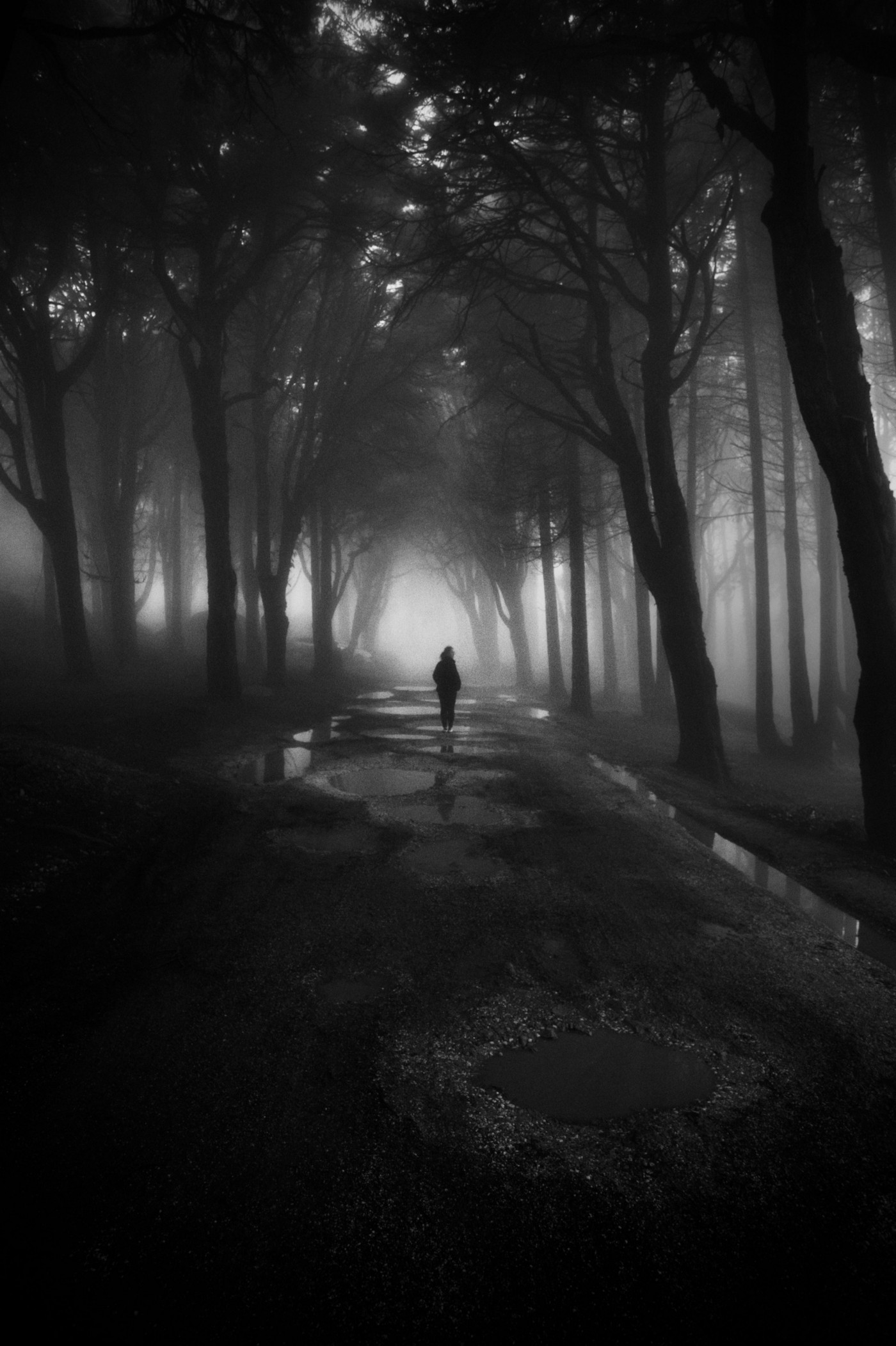 A person walks through a dark, misty forest.