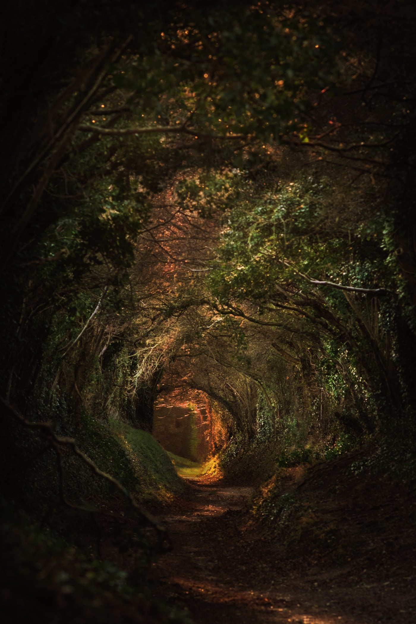 A magical looking hidden tunnel shrouded by trees and foliage