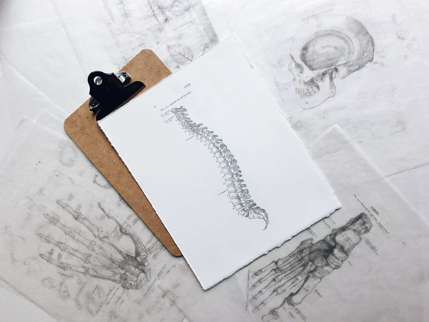 White Pice of paper with penciled illustration of spine on top of brown clip board, surrounded by other penciled drawings of the profile of a skull, a hand, and a foot.