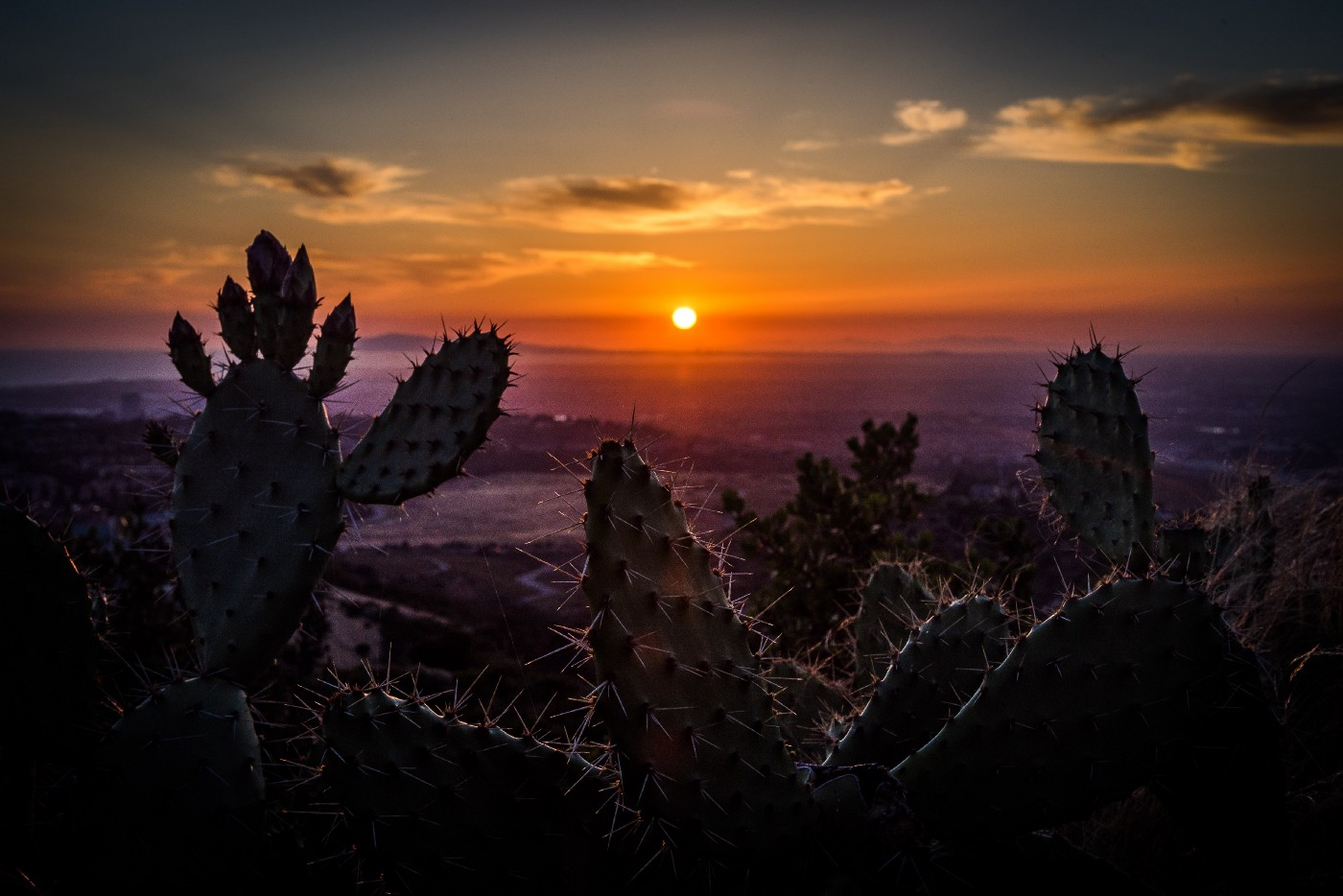 Sunset in the Southwest with cactii and orange skies and clouds.