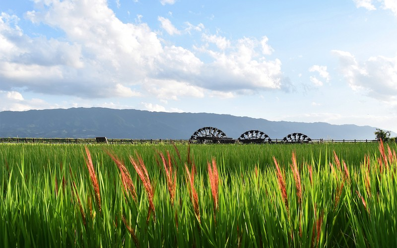 Asakura's iconic water wheels along the Chikugo River.