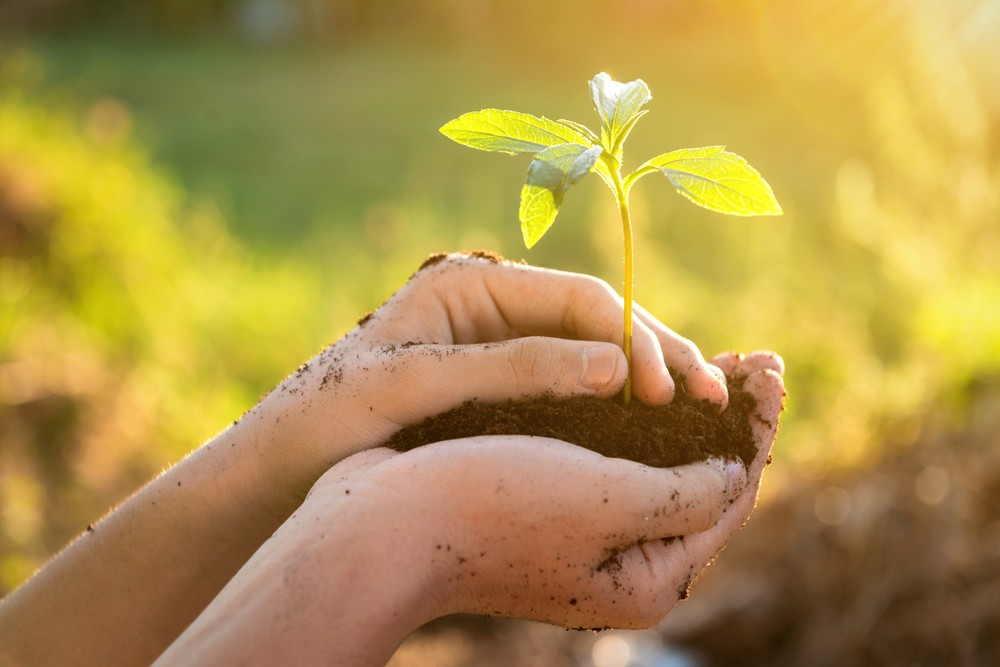 A hand holding a seedling and soil.