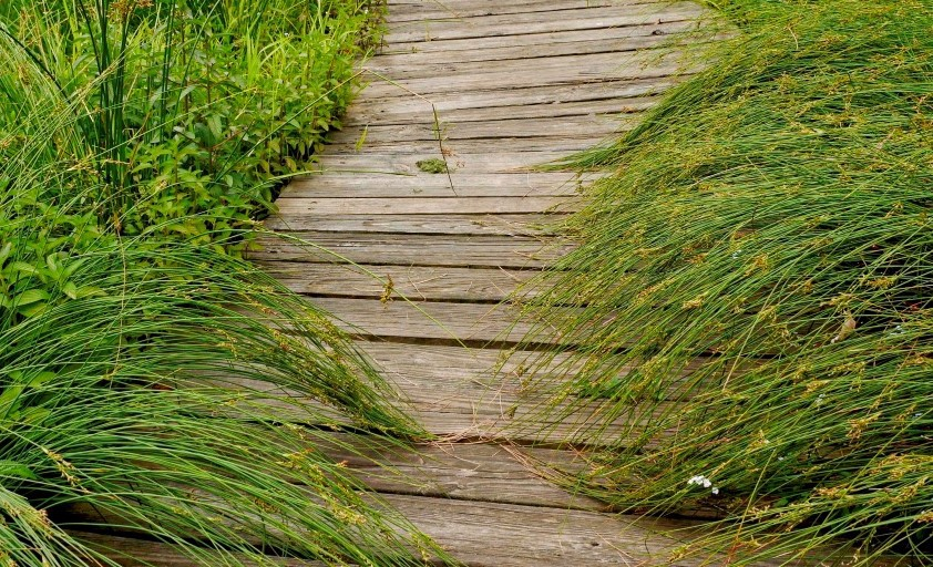 Path of wooden planks surrounded by grass, leading into this distance.