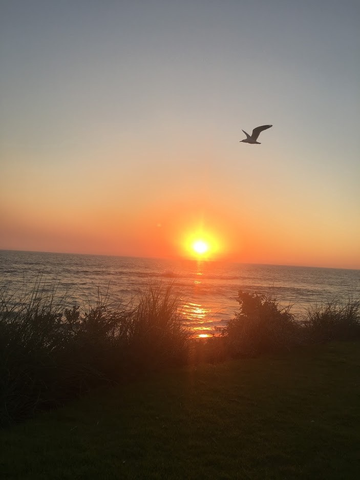 Sunset over water with sea gull flying
