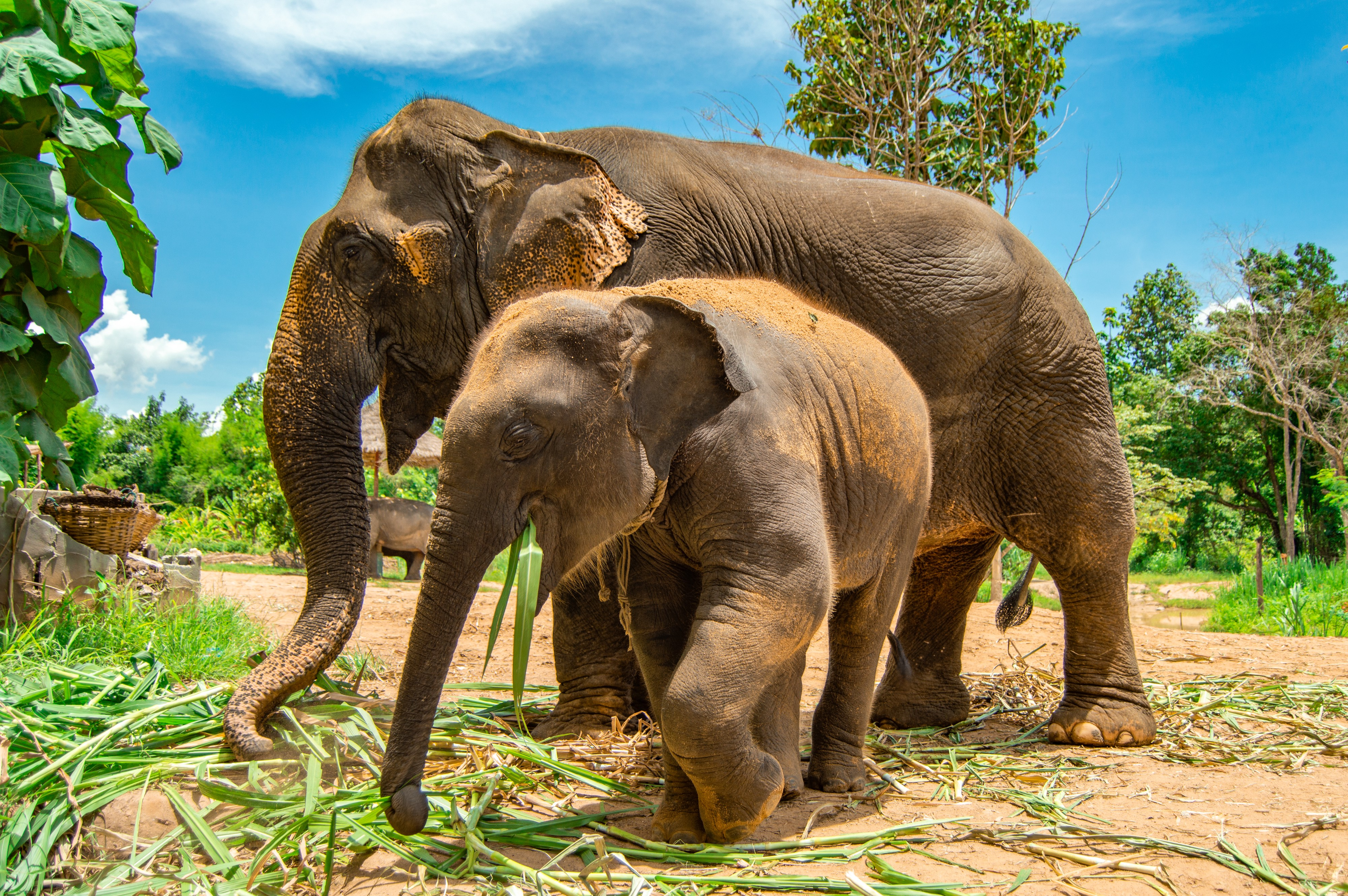 What They Don't Tell You About Elephant Sanctuaries in Thailand