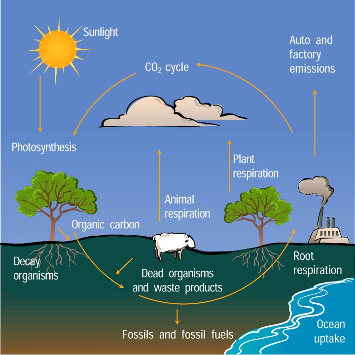 What is this Carbon Cycle?