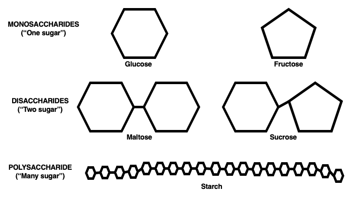 Glucose and fructose are simple carbohydrates that can be chained to build more complex carbohydrates.