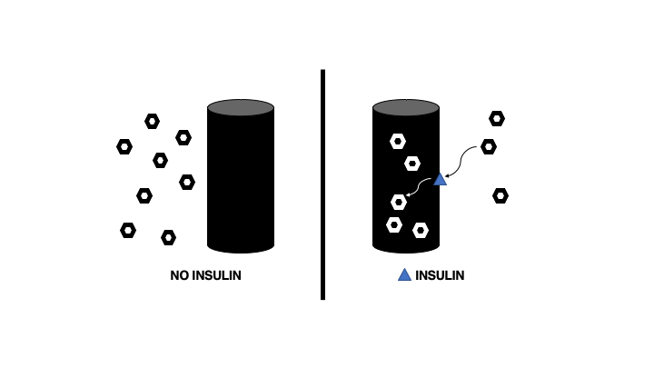 Insulin signals to the liver and muscle to take in blood glucose and lowers blood glucose levels.
