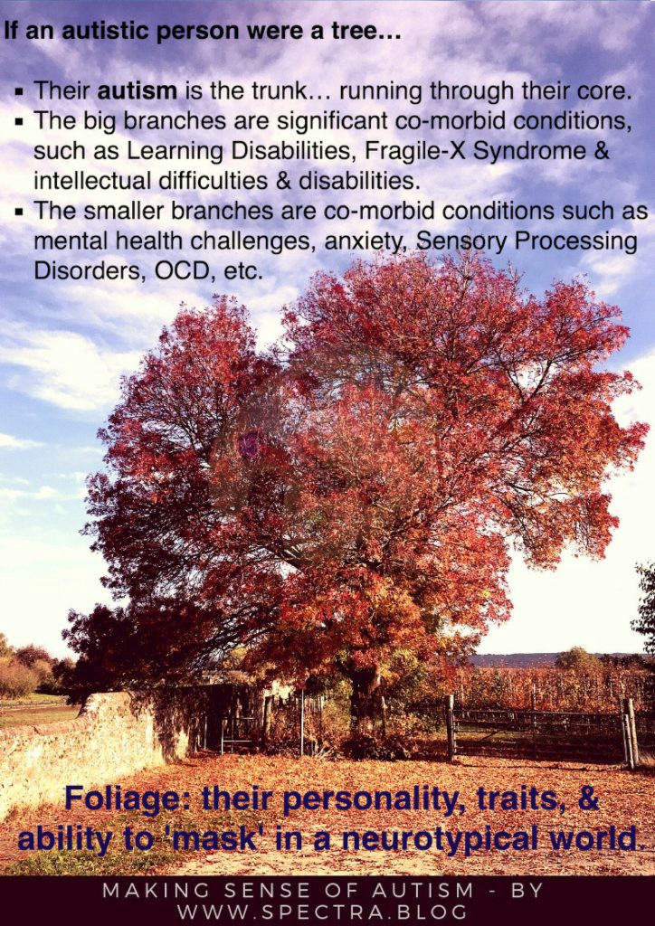 A picture showing a tree to explain autism, asc, asd, Asperger's