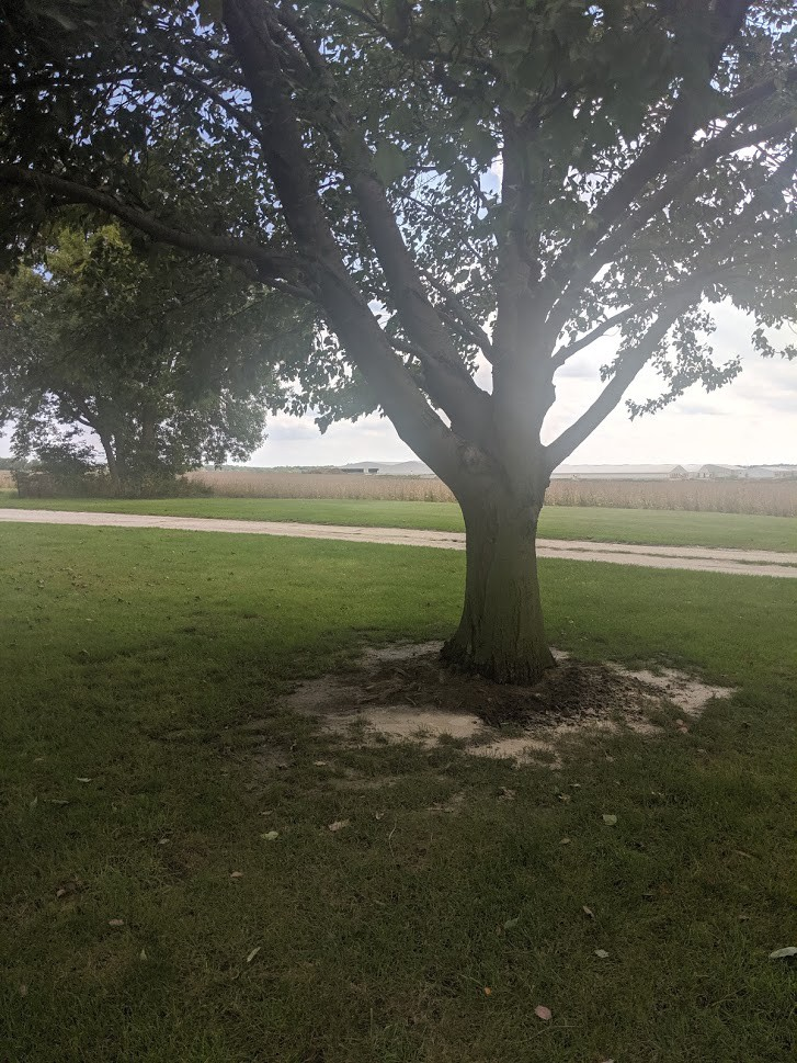 My mother's ashes spread around an old tree on our family farm in Illinois