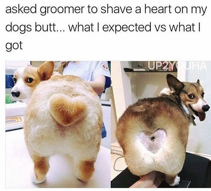 Hilarious pet haircuts that totally went wrong , Jessica