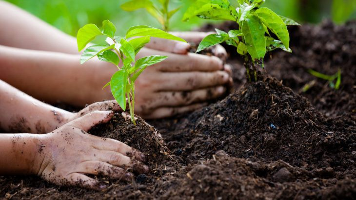 Plant trees, it will surely help nature to survive!