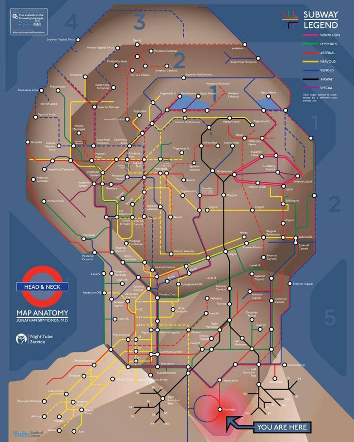 Metro map on a drawing of a human face and neck with lines for arteries and nerves