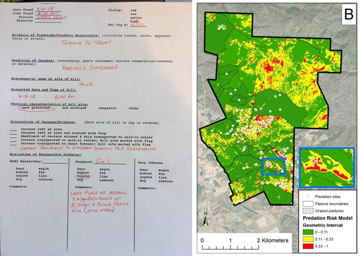 Fig. 1. We used records of coyote depredation on sheep (left) as data to model and map coyote predation risk (right).