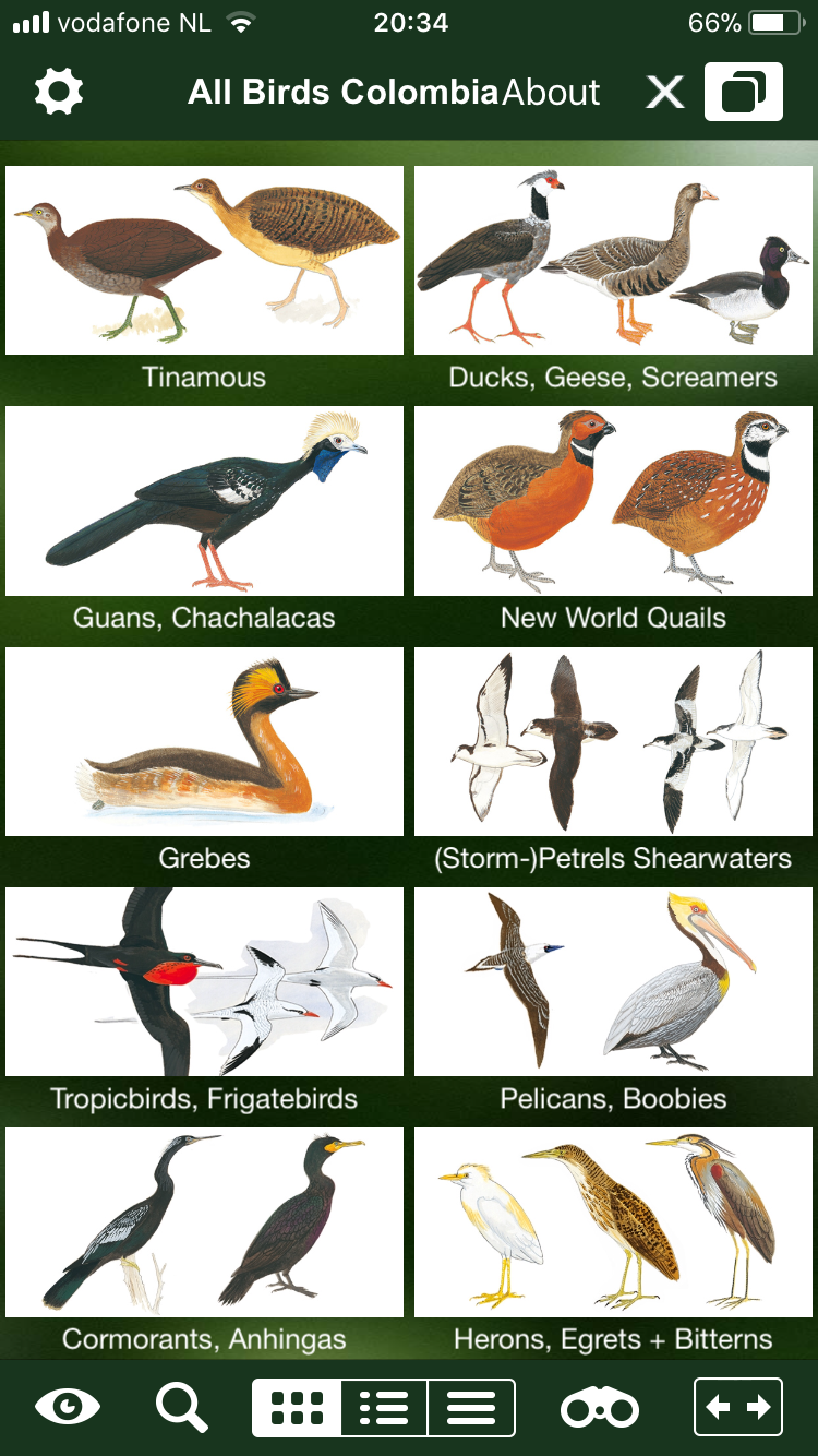 All Birds Colombia. App review   by