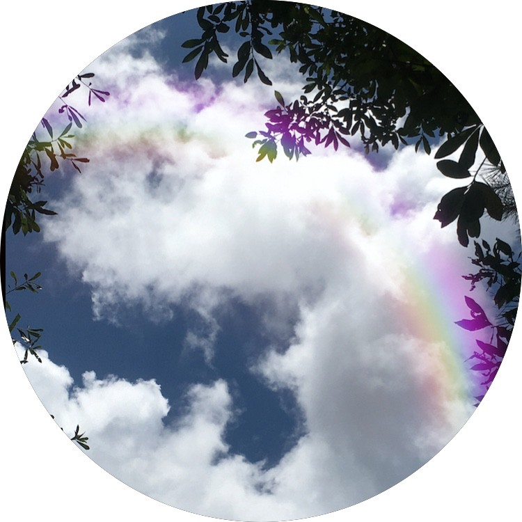 Blue sky, fluffy cumulus clouds framed by the leaves of water oak, rimmed in rainbow.