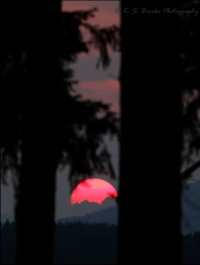 Sunset in a mountain forest
