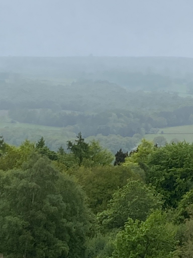 View over treetops to misty hills in background