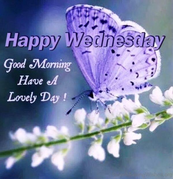 Happy Wednesday Quotes And Saying-Facebook & Whatsapp Status   by Greetings  Mag   Medium