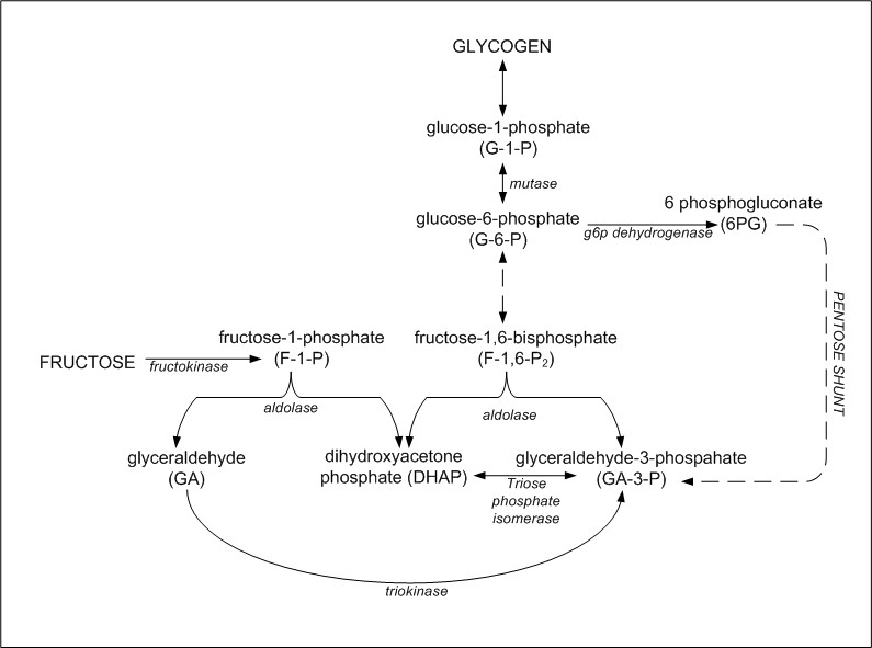fat metabolism in liver