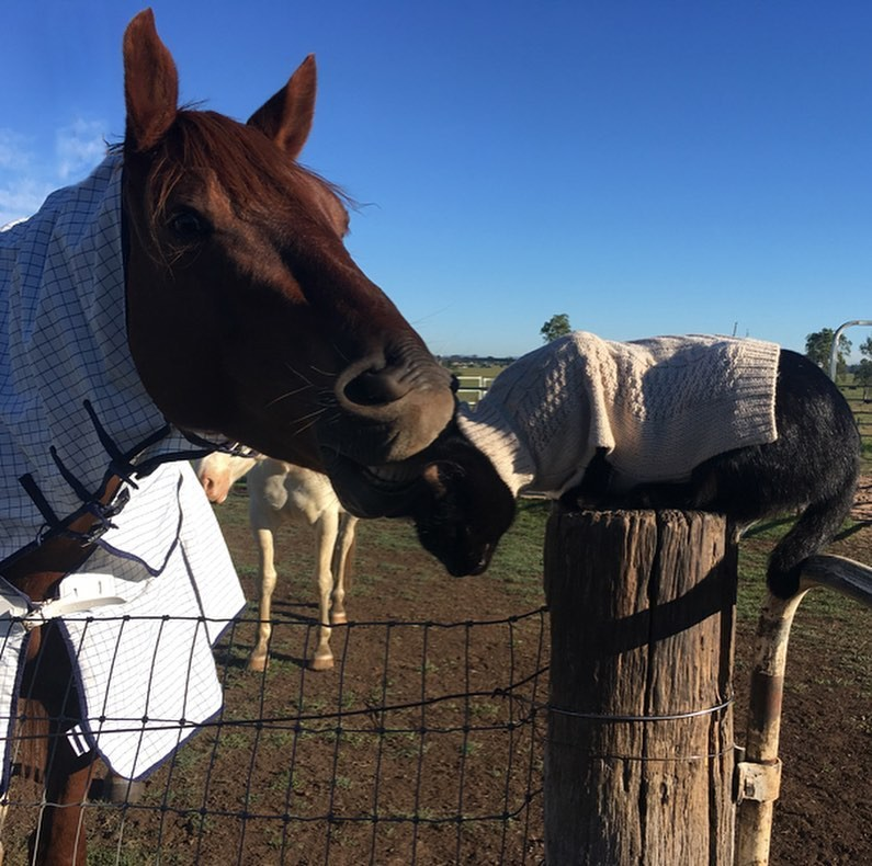 Champy gently chewing on Morris' ear; Morris is sitting on a fence post, wearing a sweater.