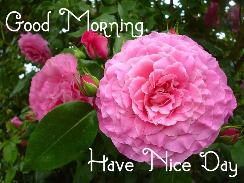 Good Morning 500 Quotes Messages Images And Wishes By Jdthoughts Medium