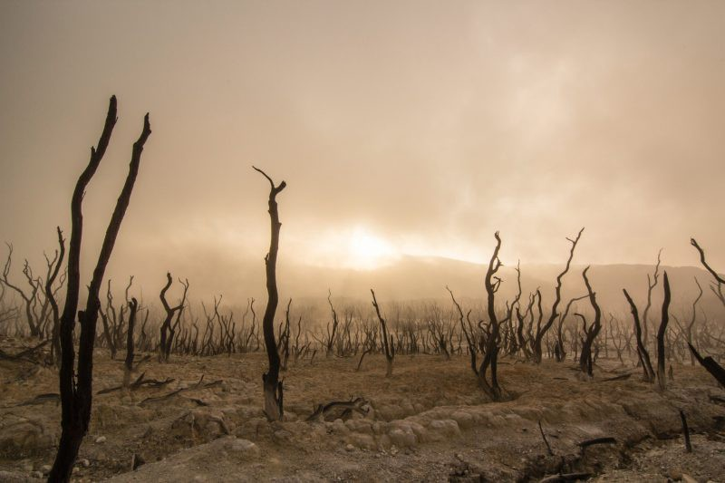 desolate future Earth, dead trees and a barren landscape