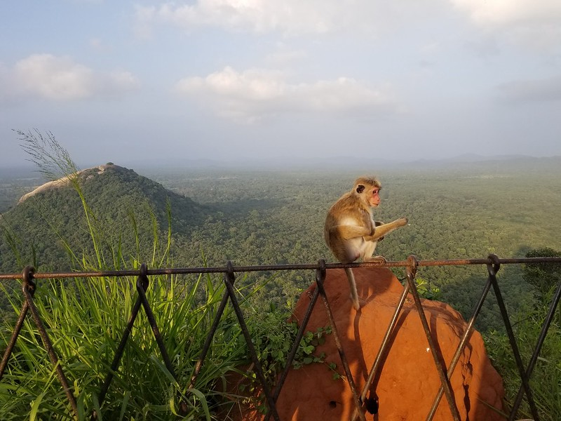 Monkey on a fence on the mountain top.