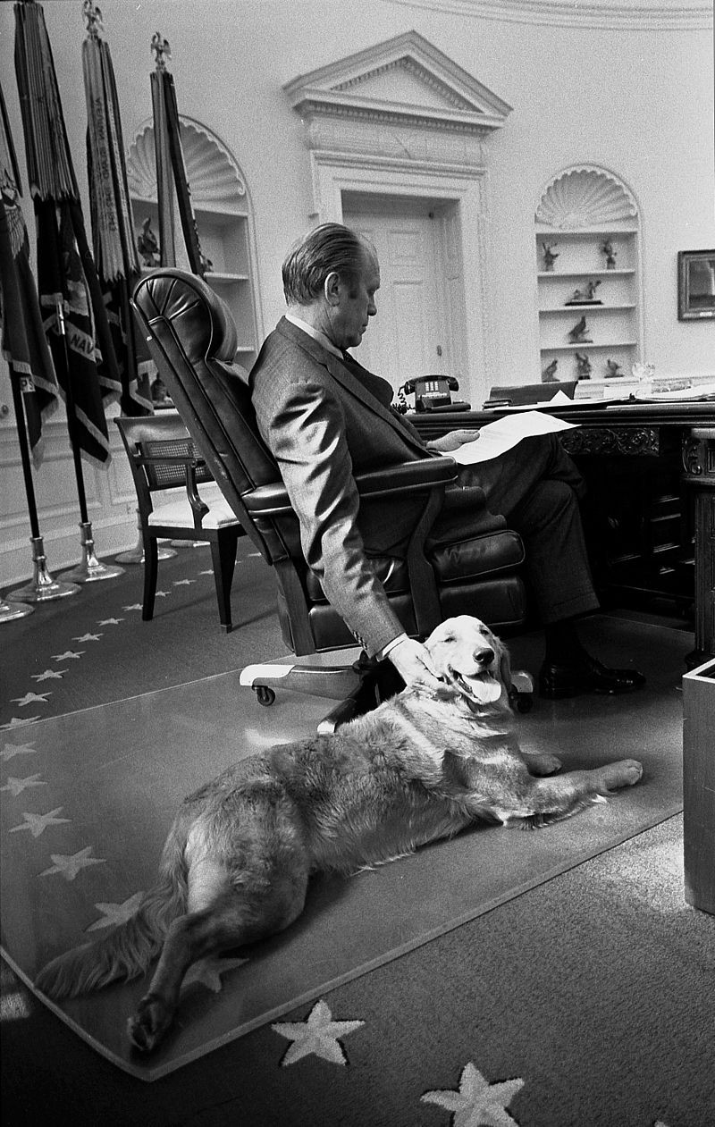 Gerald Ford in Oval Office petting dog while reading at Resolute Desk