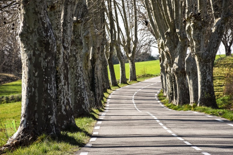 Scenic tree-lined road