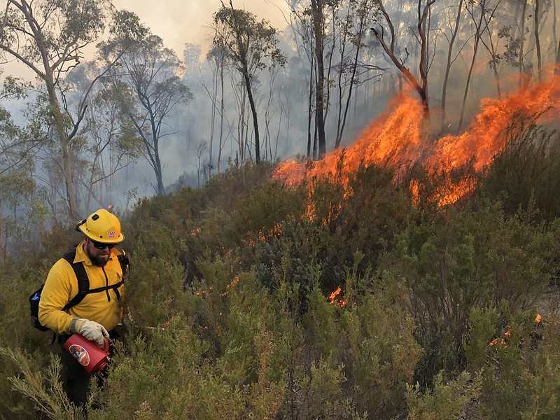 Controlled wildfire with fireman