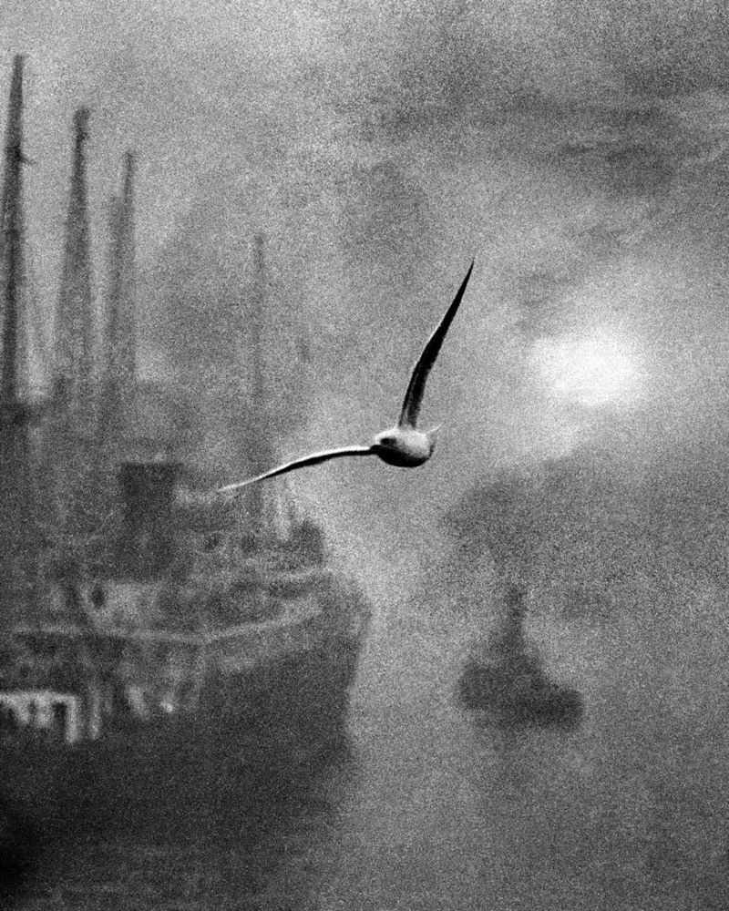 seagull flying between a ship, its tugboat, and the distant sun blurred by fog