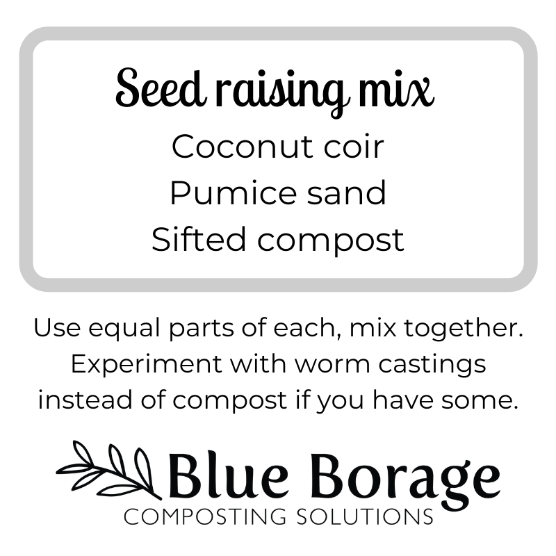 A recipe for seed raising mix: 1/3 coconut coir, 1/3 pumice sand and 1/3 sifted compost. This is what we use at Blue Borage.