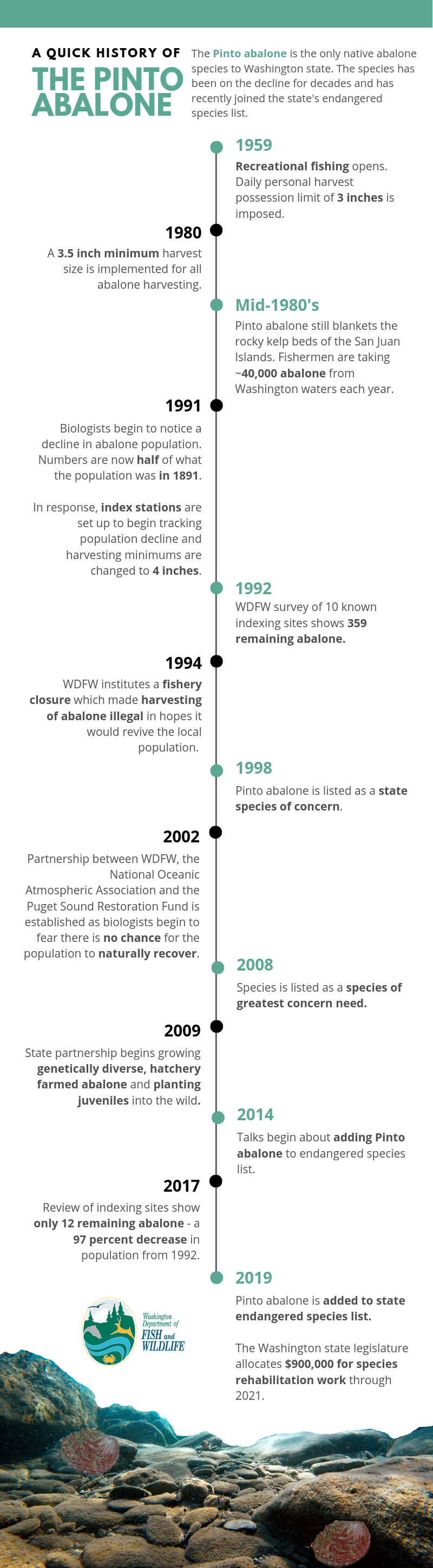 A timeline of the decline of the Pinto abalone.